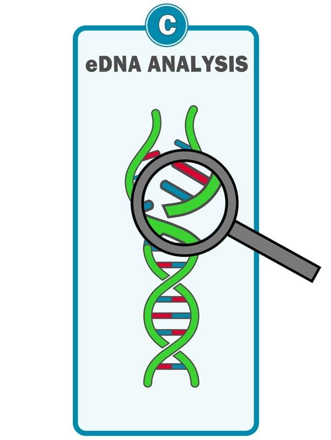 Waterra eDNA Filter - Analysis